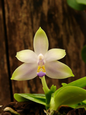297290_exposition-orchidees