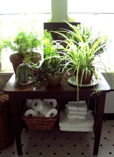 houseplants-opt_rect540