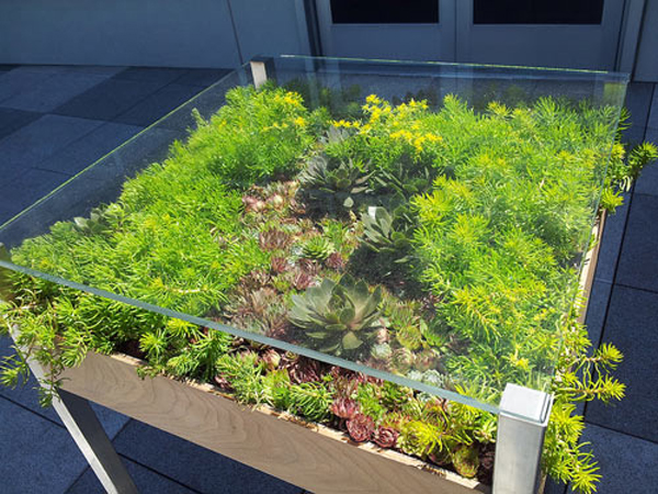 plants-for-small-space-solutions