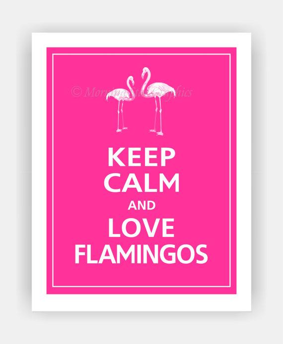 flamingo-7