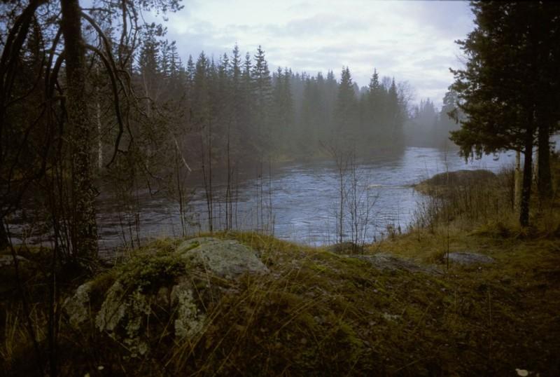 sweden-river-fog-in-trees (1)