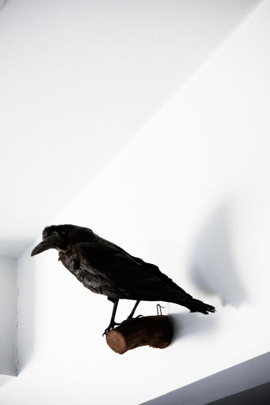 paul-raeside-caitlin-wylde-4658