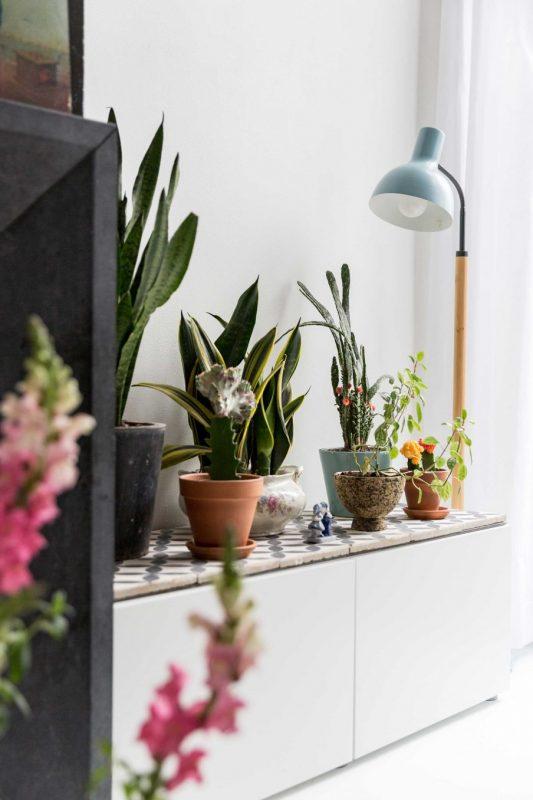 6-plantenverzameling